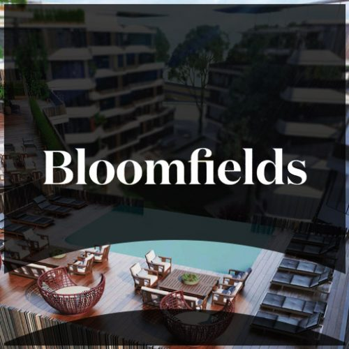 Bloomfields-thumb-001